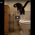 Bolletta dell'acqua 💧 alle stelle, è tutta colpa del gatto!