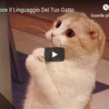 Come Capire Il Linguaggio Del Tuo Gatto