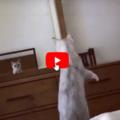 Gatto curioso scopre di avere le orecchie