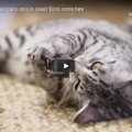 Devi lasciare il tuo gatto solo in casa? Ecco come fare