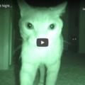 Cosa fanno i gatti di notte? Ecco tutte le loro attività