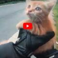 Gatto in mezzo alla strada, due uomini fermano il traffico per salvarlo: il video diventa virale