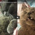 Notte brava per un gatto lasciato libero in una pensione 😸
