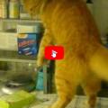 Il mio gatto fa così quando vuole che smetta di stare al pc