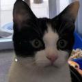 Gatto cade da 9 metri e sopravvive, ma quando guarisce i proprietari lo abbandonano