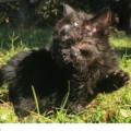 La storia di Duo, il gatto nato con un corpo e due facce che lotta per una vita normale