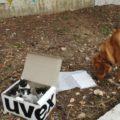 Cane trova una scatola con dei gattini, e diventa il papà adottivo migliore del mondo
