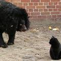 L'incredibile incontro allo zoo fra un gatto e un orso
