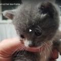 Promise, il gattino il cui salvataggio è costato il lavoro ad un uomo