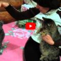 Attenzione alle coccole quando ci sono più gatti in casa