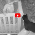 Bimbo e gatto: Una  chiacchierata prima di andare a nanna