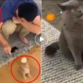 Un uomo gioca con il micetto appena adottato, la reazione del gatto adulto è da non perdere
