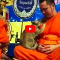 Il gatto in cerca di attenzioni mette a dura prova la pazienza del monaco buddista