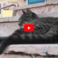 La storia di tennies: La gatta che ha aspettato per mesi il suo umano davanti all'ospedale