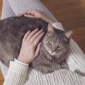 Come ci vedono i gatti? Né amici né proprietari: siamo i loro genitori