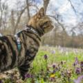 Guinzaglio per gatti: sì o no?