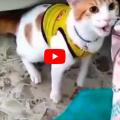 Gatto esulta con il suo papà umano urlando GOALLLL  Il video diventa virale
