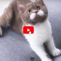 Un gattino con i baffi perfetti