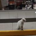 Il gatto che convince i passanti a comprare del cibo per lui