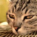 Coronavirus, gatto disinfettato con la candeggina è morto nel Cremasco