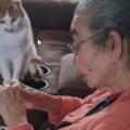 Un gatto aspetta pazientemente la nonna che ripara il suo giocattolo preferito
