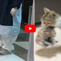 Mamma gatto porta il suo gattino malato in ospedale