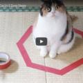 Gatti nei cerchi, il fenomeno spiegato da un esperto