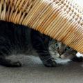 Fattori di stress nel gatto: 8 cose che non ti aspetti 😼