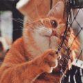 Disturbo dello spettro autistico nei gatti: cosa è