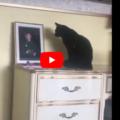 Al gatto manca il suo papà umano, ma trova la soluzione (Video)