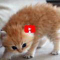 Pixel un gattino molto pericoloso