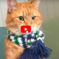 In memoria di un gatto di strada chiamato Bob