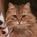 """Una donna trova un biglietto al collare della sua gatta: """"Ha una casa? E' sempre al ristorante"""""""