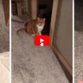 Al gatto non piace affatto che un operatore immobiliare entri  a casa sua