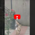 Un gatto entra nel giardino dove abita un cane quello che accade è unico