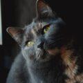 Quando è morto il mio gatto, quasi mi vergogno a confessarlo, ma ho sofferto più che per la morte di papà