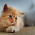 La dichiarazione d'amore dei gatti al proprio umano è questa