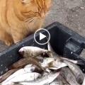 La gattina prende un pesce per darlo alla sua morosa