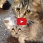 Mamma gatta protegge il suo cucciolo