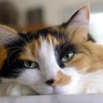 Come Dimostrare Affetto a un Gatto