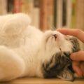 Come sapere se il nostro gatto ha la febbre