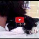 Con un gatto si vive meglio