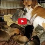Cane si prende cura dei gattini rimasti orfani