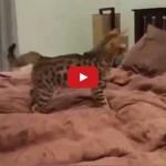 Hai un gatto, è'Domenica e vorresti dormire ? ..Mhaaa
