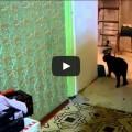 La tecnologia avanza .. il gatto si adegua