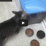 Logica felina – Se si vede il fondo della ciotola è vuota