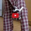 Gatto più grande difende umano dalle scorribande del più piccolo