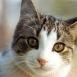 Come capire se il vostro gatto sta male – Sintomi dalla A alla Z