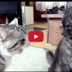 Anche i gatti pretendono spiegazioni