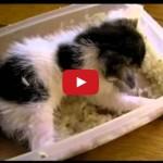 Gattino non condivide la sua ciotola.